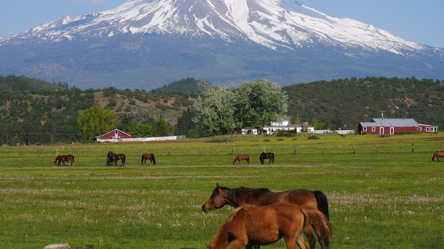 horses-with-shasta